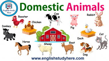 Domestic Animals Names in English