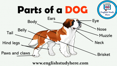Parts of a Dog Vocabulary